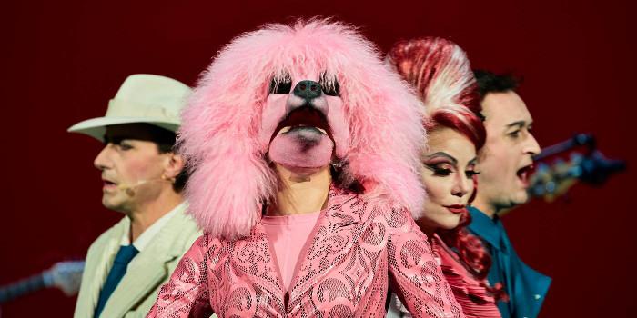 Alfredo Arias | Madame Pink